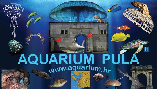 Pula akvarij